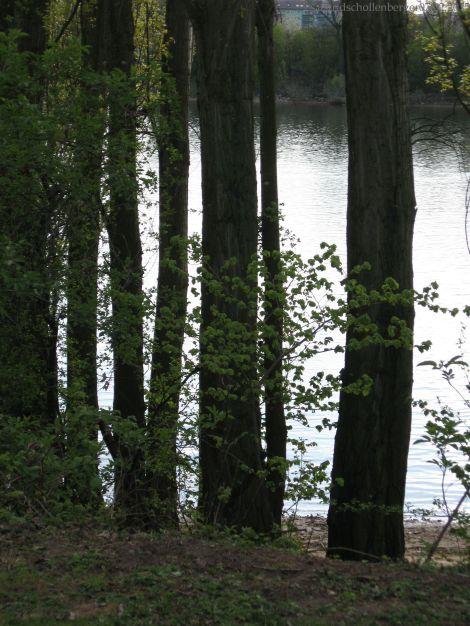 Gegenlichtbäume_1