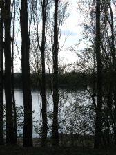 Gegenlichtbäume_2