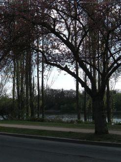 Gegenlichtbäume_4