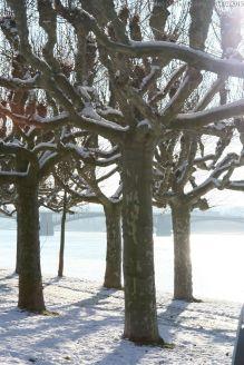 Gegenlichtbäume_5